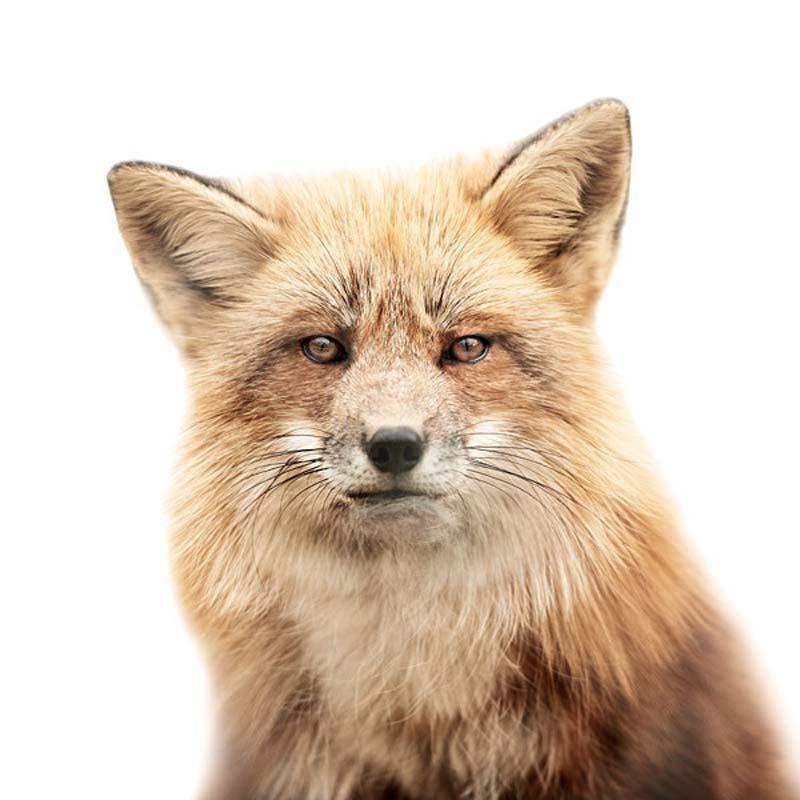 Morten Koldby - Hayvan-Portreleri (Animal Portraits)