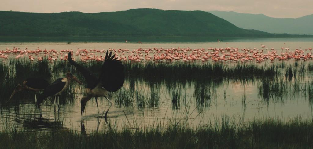 Lake Nakuru - Nakuru Gölü - Kenya - Flamingol - 2010  Fotoğraf :  Oylum  Yüksel