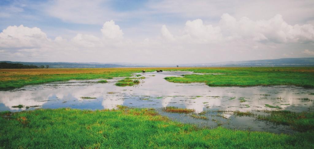 Lake Nakuru - Nakuru Gölü - Kenya - 2010  Fotoğraf :  Oylum  Yüksel