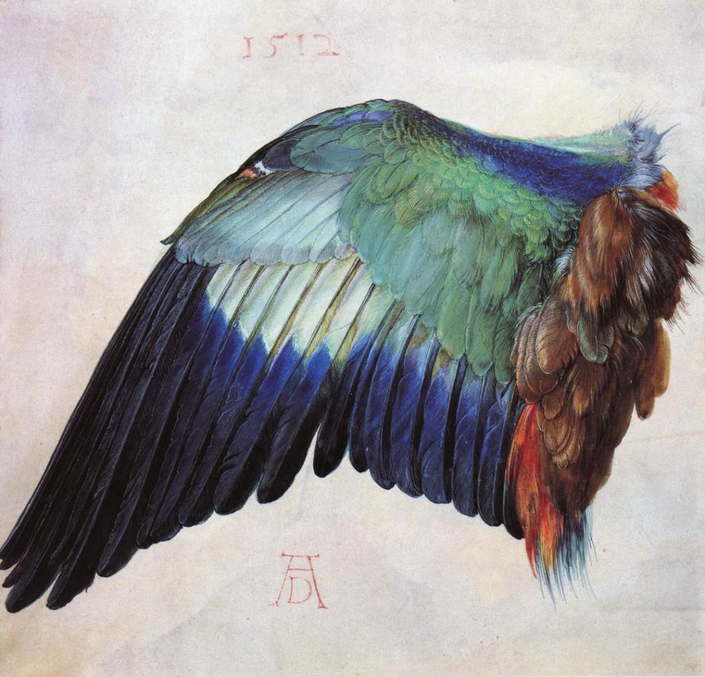 Wing of a Roller (1512), Albrecht Dürer