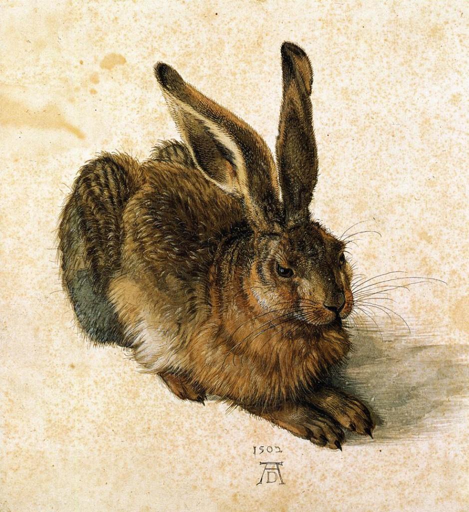 Young Hare (1502), Albrecht Dürer