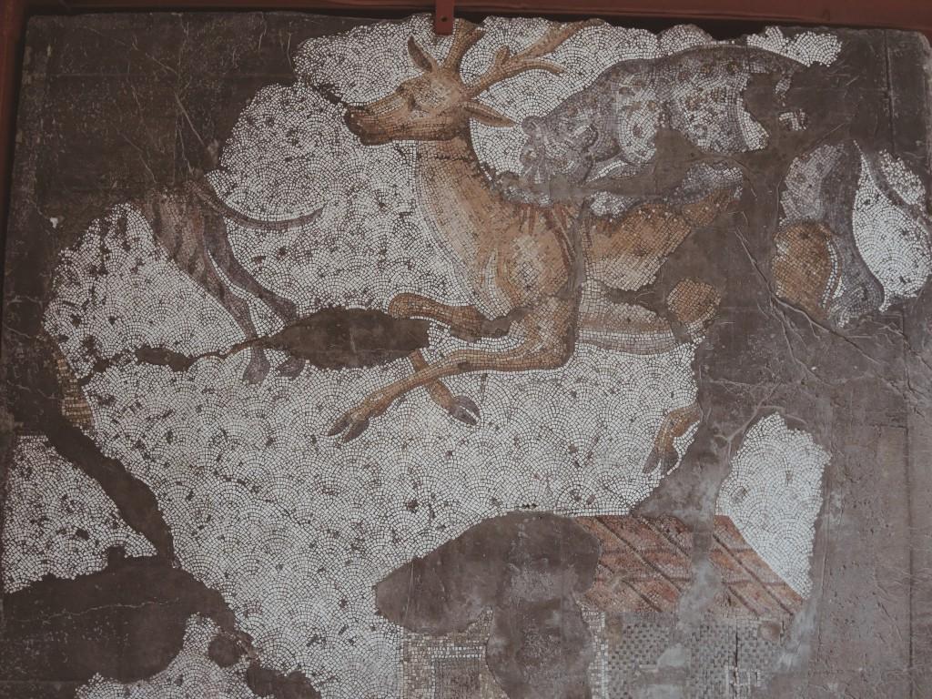 Büyük-saray-mozaikleri-müzesi-istanbul-baya-iyi-5