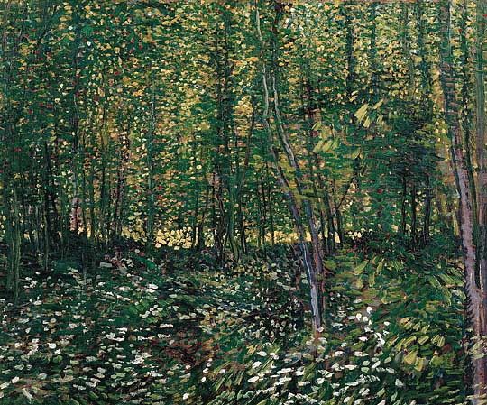 Trees and Undergrowth, Vincent Van Gogh, Van Gogh Museum, Amsterdam, Hollanda