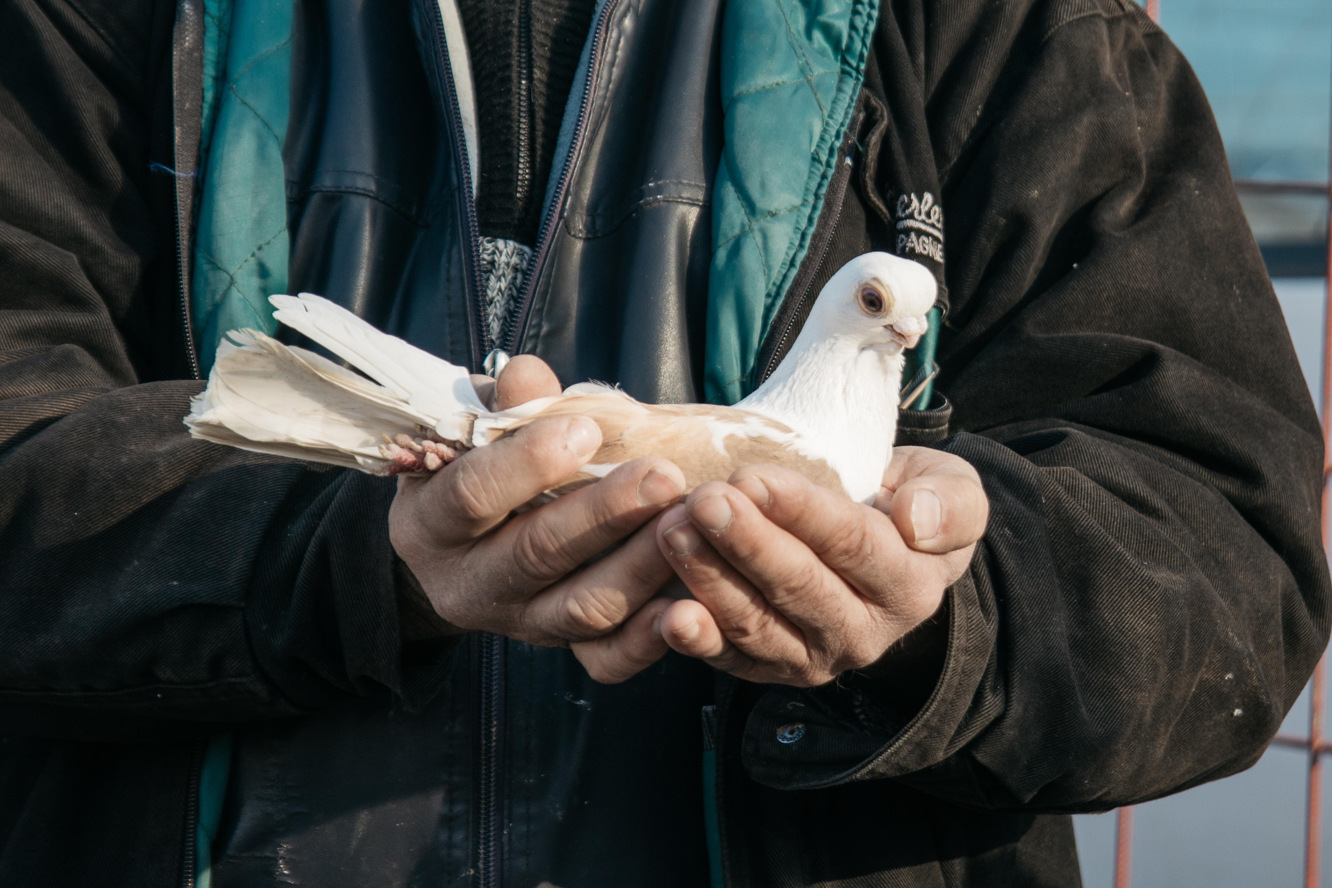 Edirnekapı Kuş Pazarı, Bülent Güner, Osmanlı Mısıri Kuşu