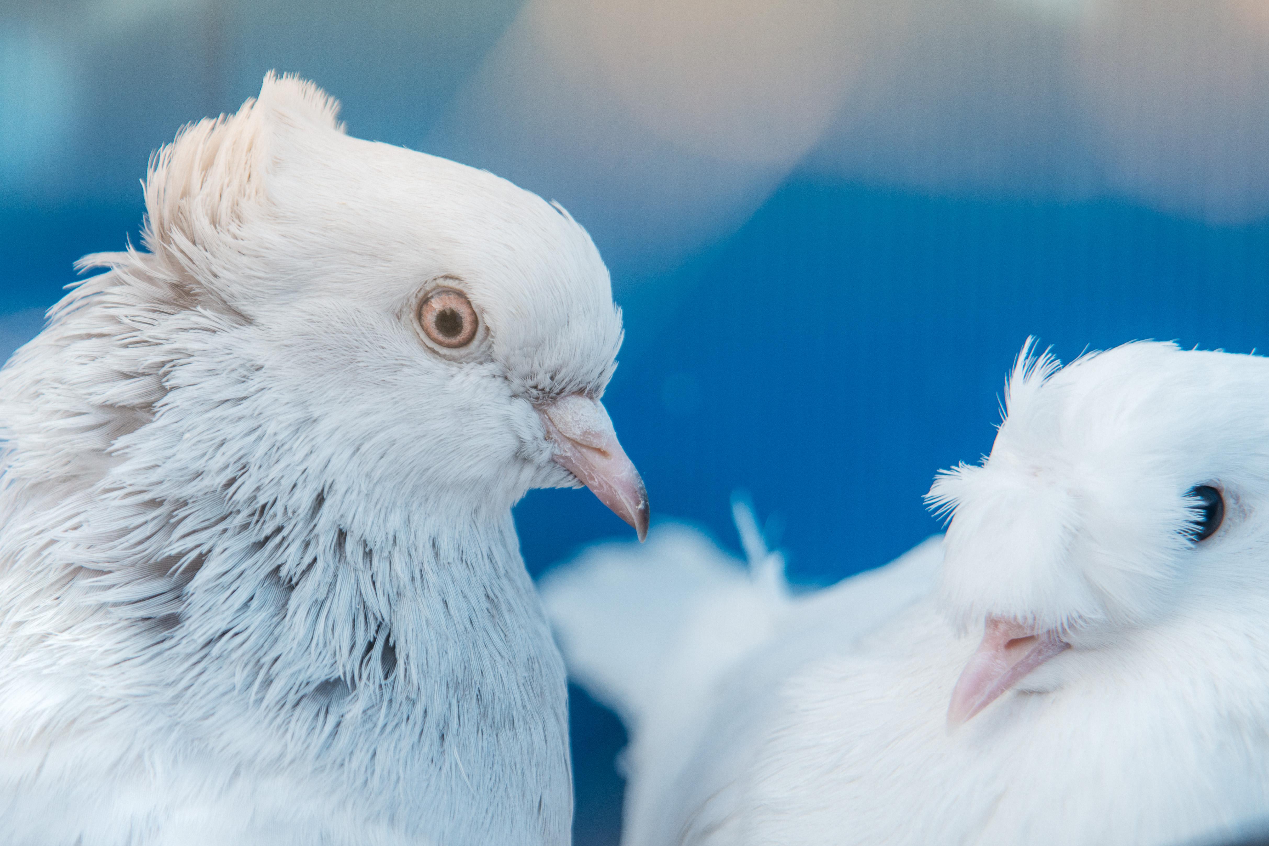 Edirnekapı Kuş Pazarı